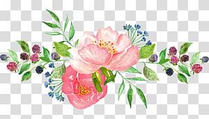 Flores em aquarela, rosa pétalas de flores png