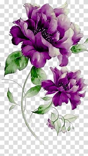 Design floral roxo da flor, flores roxas, peônias roxas png