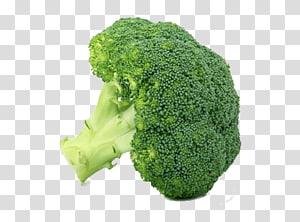 ilustração de brócolis verde, vegetal de folhas brócolis vegetal de inverno, vegetal PNG clipart