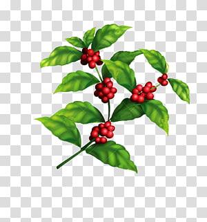 lote de frutas vermelhas com ilustração de folha verde, café arábica, feijão de café, material de grãos de café de árvore de café png