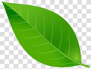 Folha, folha de primavera, folha verde PNG clipart