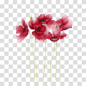Pintura em Aquarela Flor Desenho Arte, Aquarela flores, pétalas de flores rosa PNG clipart