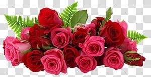Rosa flor, rosas vermelhas e rosa, buquê de rosa vermelha closeup PNG clipart