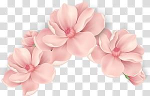 Flores cor de rosa Flores cor de rosa, flores pintadas à mão, flores com pétalas de rosa png