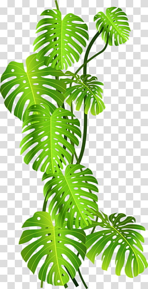 planta de folhas verdes, floresta tropical Tropics Jungle Tropical, folhas de coco verde png