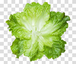 alface verde e branca, carne de comida vegetal de alface, folhas de alface verde fresca png