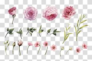 Convite de casamento de flor rosa, HD aquarela pintada à mão rosas, flores de pétalas de rosa png