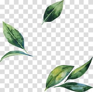 Ilustração de flor de folha, folhas pintadas à mão em aquarela, folha verde png