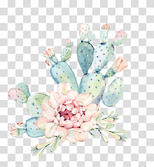 Cactaceae Pintura em aquarela Planta suculenta Euclidiana, Pintados à mão flores em aquarela, plantas verdes cacto, cacto verde e rosa PNG clipart