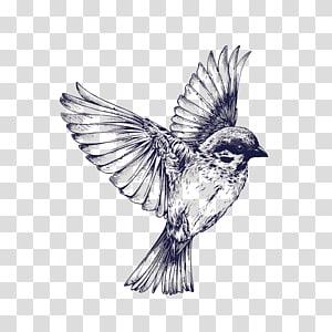 Ilustração de pássaro, voo de pássaro tatuagem desenho andorinha, pardal pintado à mão PNG clipart