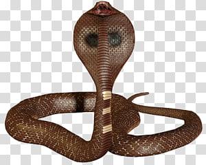 3D cobra cobra 3D rei cobra, cobra PNG clipart