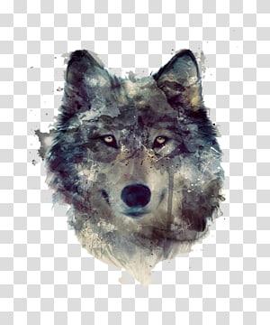 ilustração de lobo, cão leão Pack, cabeça de lobo aquarela cinza png