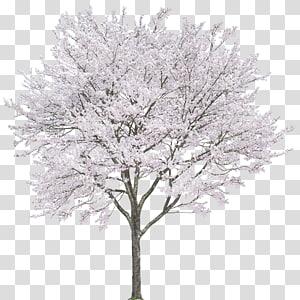 árvore de folhas brancas, arquivo de computador Android, cerejeiras png