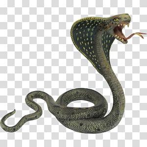 cobra, cobra, cobra indiana cobra, cobras PNG clipart