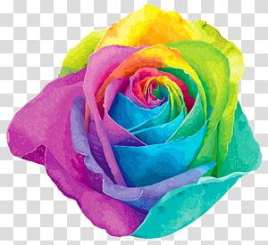 Flor arco-íris rosa, arco-íris multicolorido rosa, ilustração multicolorida rosa PNG clipart
