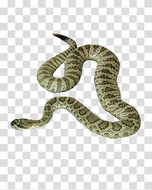 Ícone de cobra, cobra PNG clipart