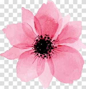 Euclidiana, rosa linda aquarela flores, rosa pétalas de flores pintura PNG clipart