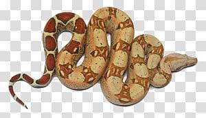 Anaconda Verde Cobra, Anaconda PNG clipart