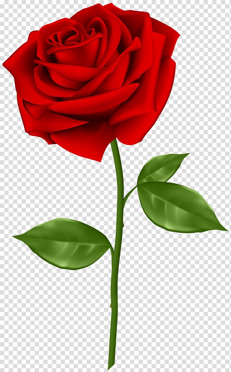 ilustração de rosa vermelha, rosa azul, rosa vermelha PNG clipart