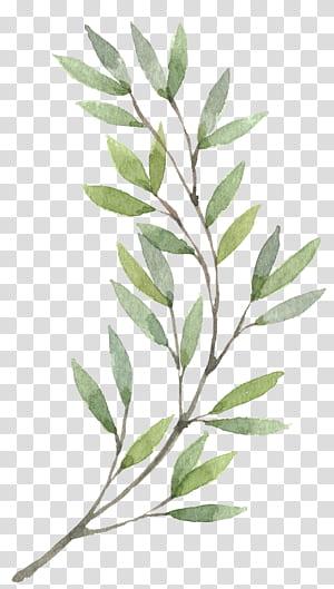 Grinalda Aquarela pintura Flor, plantas pintadas à mão, folhas verdes pintura PNG clipart