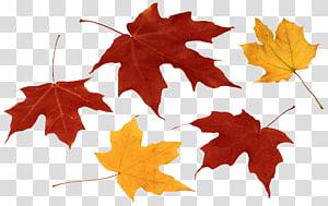 folhas de bordo, cor da folha de outono, folhas de outono PNG clipart