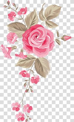Rosas de jardim Rosas centifolia Design floral Flores cortadas Buquê de flores, Fundo de flores pintadas à mão, rosa PNG clipart