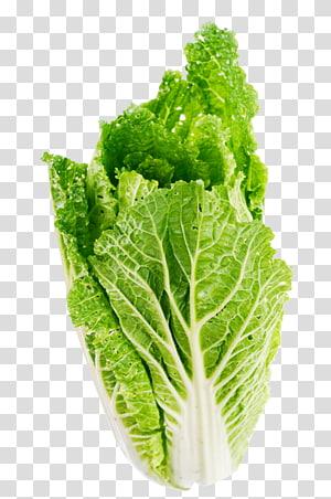alface verde, alface de alface romana Alface Butterhead Legume, folha de alface png