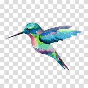 pintura da aguarela do colibri, pintando png