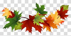 Folha de outono cor, folhas de outono, folhas de bordo vermelho e verde PNG clipart
