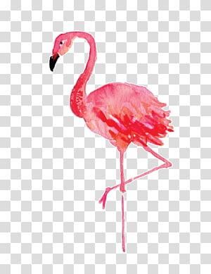 ilustração de flamingo, Stephenville Flamingo pintura em tela de desenho aquarela, flamingos png