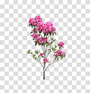 flores de pétalas de rosa, flor, paisagem flores e árvores PNG clipart