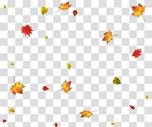 folha de bordo, folha de outono, folhas de outono caindo PNG clipart