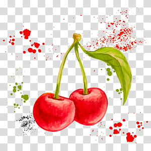 cereja, pintura em aquarela desenho fruta ilustração, cereja em aquarela png