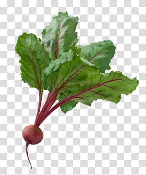 vegetais verdes, vegetais Borscht beterraba jardim frutas, A de uma beterraba PNG clipart