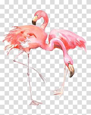 ilustração de dois flamingos cor de rosa, Flamingo AllPosters.com.br Impressão Pintura Gravura, desenho Flamingos png