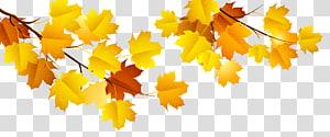 galho de árvore de folha de bordo, arquivo de computador outono, ramo de outono PNG clipart