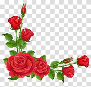 Jardim de flores planta perene Pixabay, rosas vermelhas, quadro de rosas vermelhas png