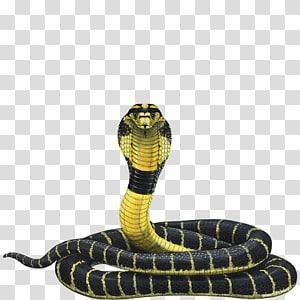 ilustração de cobra amarelo e preto, cobra réptil de cobra rei e cobra indiano, cobra PNG clipart