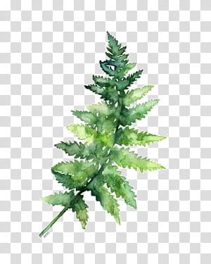 Papel Aguarela pintura Samambaia Impressão, folhas verdes, decoração de folhas verdes png