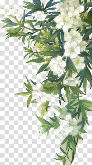 Flores silvestres familiares Flores em aquarela, flores desabrochando brancas e folhas verdes, ilustração de planta verde com flores brancas PNG clipart