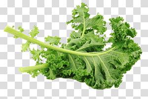 folha verde, couve Lacinato Vegetal de folha Salada couve de Bruxelas, couve criativa png
