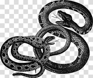 réptil cobra, cobra PNG clipart