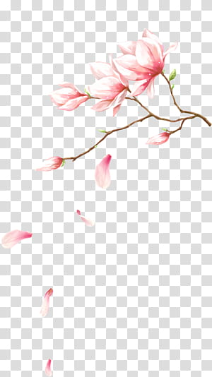 Arquivo de computador de pétalas de flores cor de rosa, flores com pétalas caindo, ilustração de flores de pétalas de rosa PNG clipart