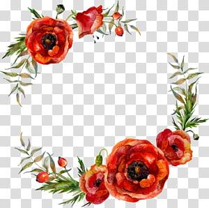 Ilustração de flores papoula, decoração de folhas de flores em aquarela, moldura digital de papoilas vermelhas png