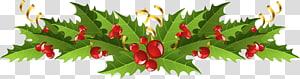 Visco decoração de Natal Azevinho comum, decoração de visco de Natal, ilustração de decoração de Natal verde e vermelho png