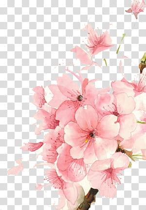 desenho de pintura em aquarela de flores em aquarela, flores em aquarela, ilustração de flor-de-rosa PNG clipart