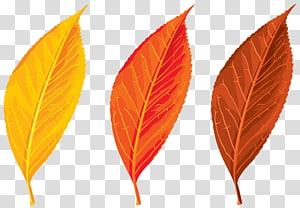 Cor da folha de outono, conjunto de folhas de outono PNG clipart