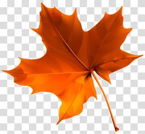 Folha de outono cor, folha de outono vermelho, folha de bordo laranja PNG clipart