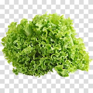 Alface Iceberg Vegetal de folha Salada Endívia Alface de folha vermelha, alface png