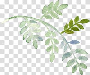 Planta Pintura em aquarela, folhas pintadas à mão em aquarela, close up de folhas verdes PNG clipart